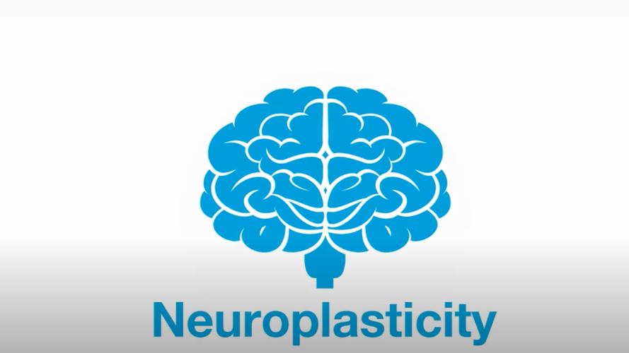 Neuroplasticity video title