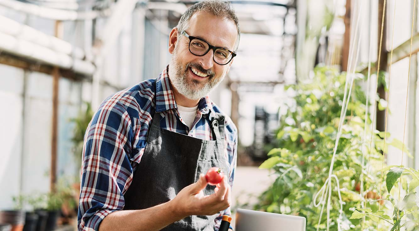 An older man working in his indoor garden, holding a tomato and smiling.