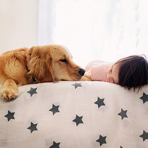 A Golden Retriever puppy and toddler snuggle on a bed.